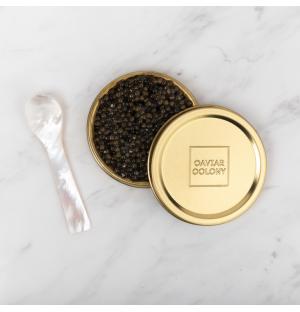 Kaluga Hybrid Caviar by Caviar Colony 30G (FREE Mother of Pearl Spoon!)